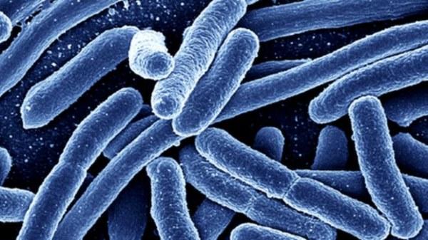 bakterija eserihija koli