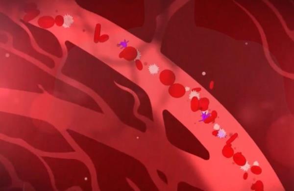 bakterija u krvi simptomi