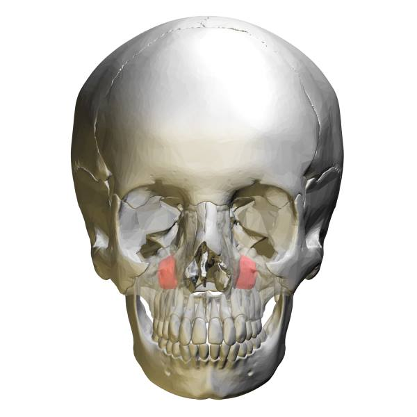 maksilarni sinus bolesti