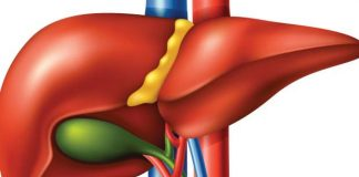 regeneracija masne jetre