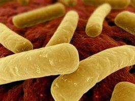 klostridija bakterija