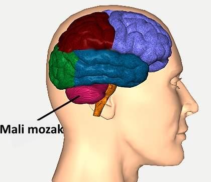 mali mozak funkcije
