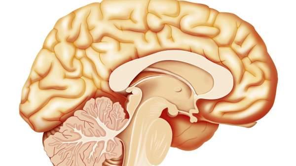 mali mozak slike